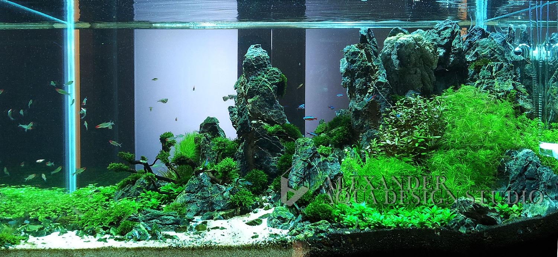 nature_aquaria